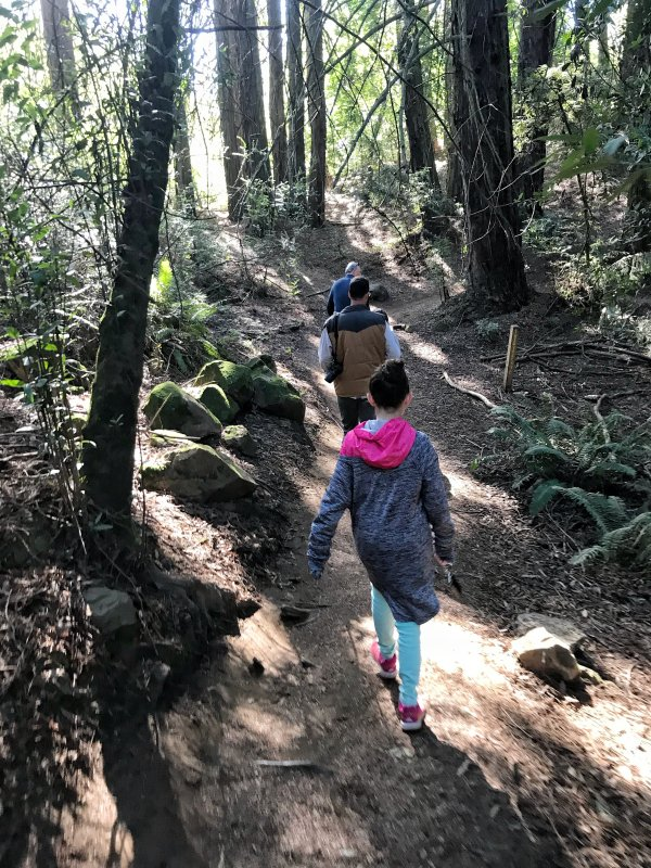 Visiting the Redwoods in San Francisco