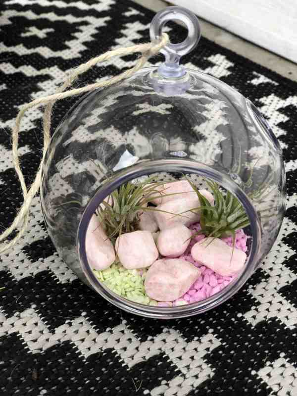 DIY mini plant terrarium