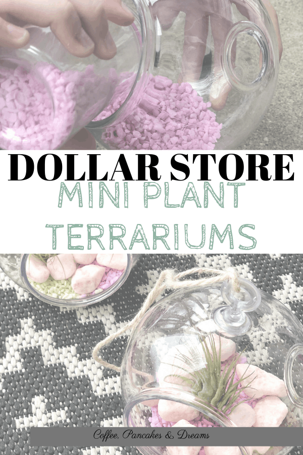 How to make a succulent terrarium #diy #airplants #minigarden #houseplants