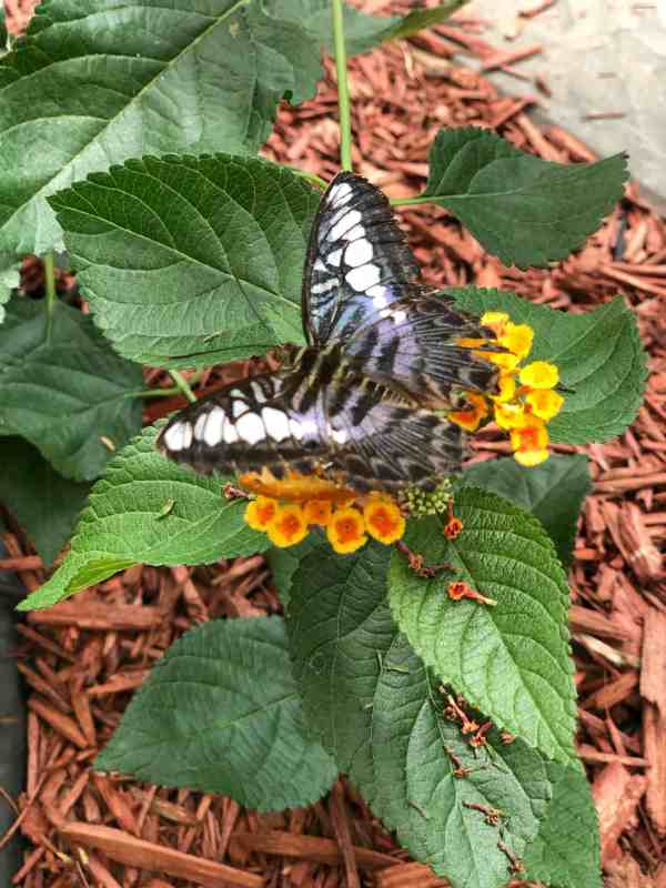 Butterfly House on Put-in-Bay #ohio #lakeerie #cleveland #sandusky