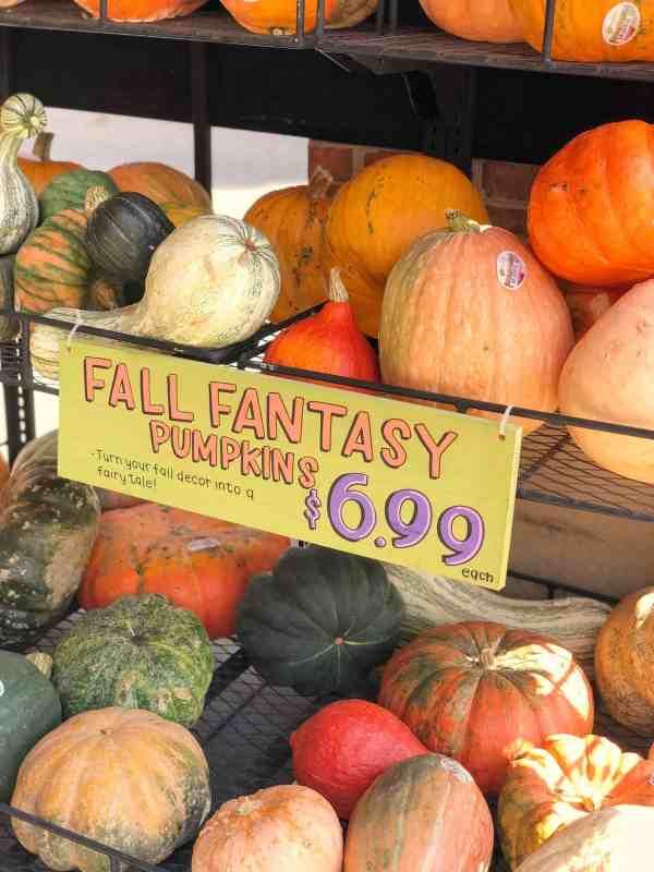 Fall pumpkins at Trader Joe's #fantasypumpkins #gourds #heirlooms