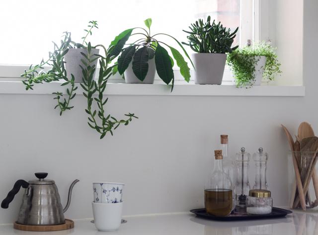 green-home-book-blogi