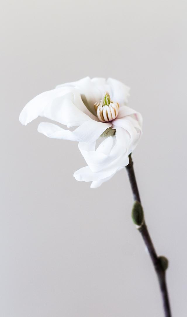 Magnolian kukka blogi-5