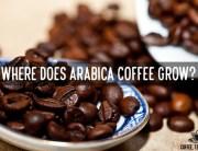 Where does Arabica Coffee Grow