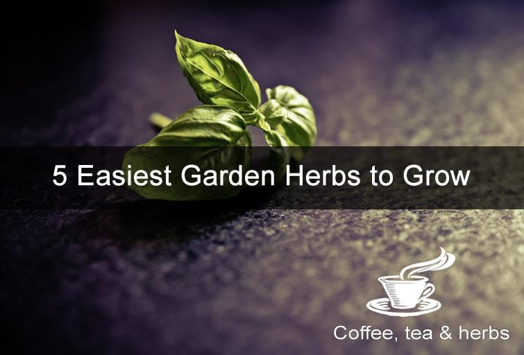 5 Easiest Garden Herbs to Grow