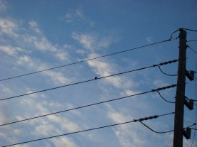 Can you see the bird on a wire?