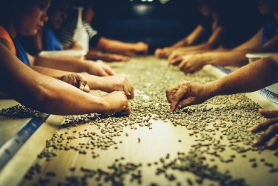 dry milling process organic coffee beans