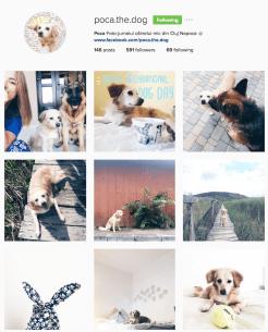 Cum fără ea? Draga de Poca! https://www.instagram.com/poca.the.dog/