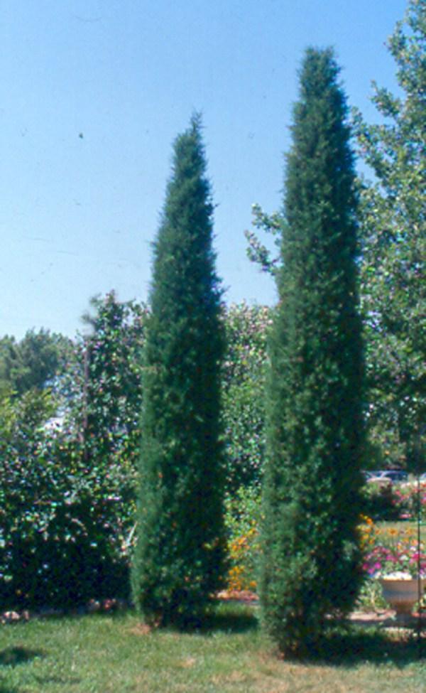 landscaping nashville home