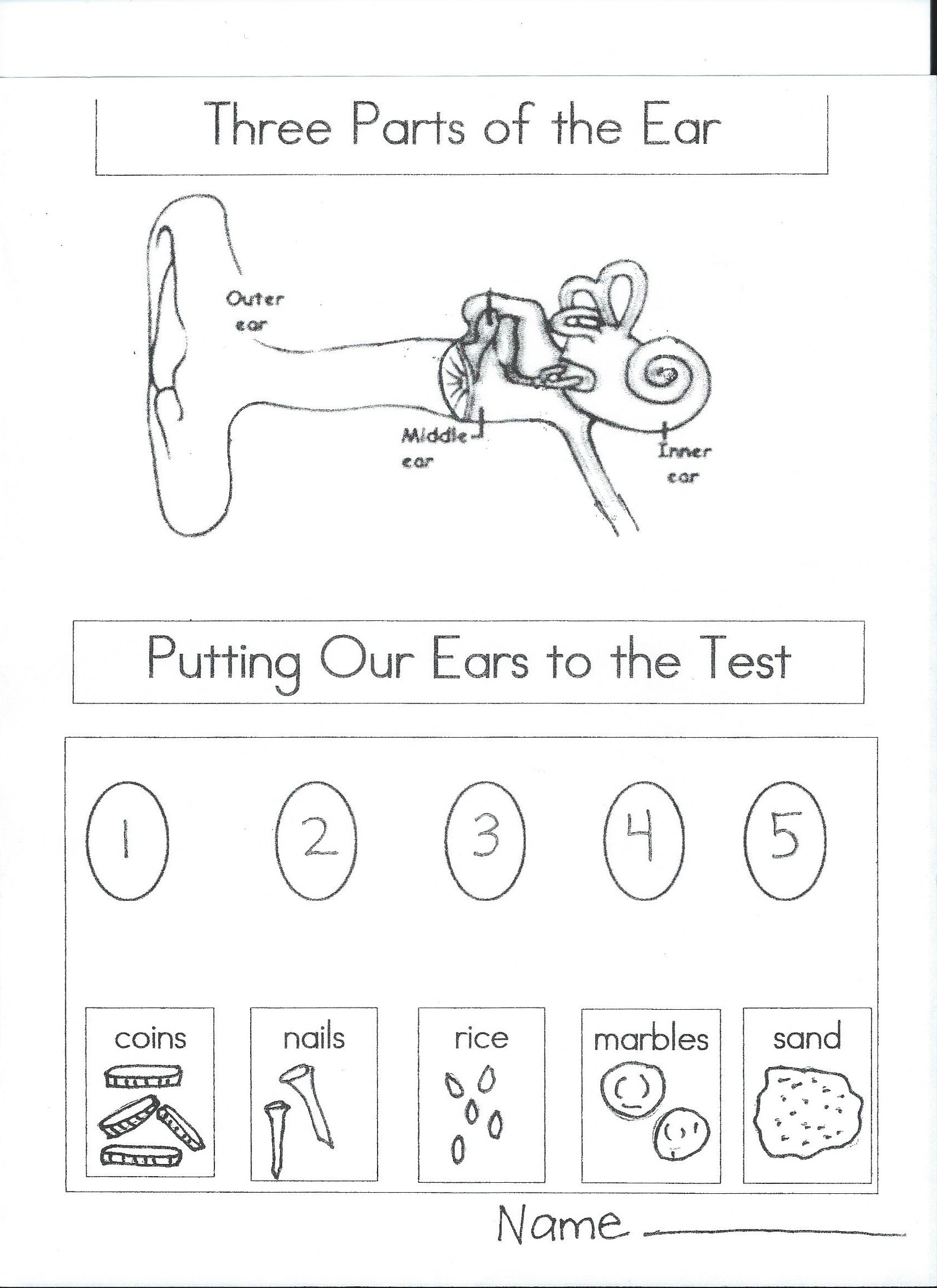 Sight Sense Worksheet Preschool