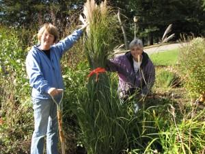 Nursery Garden 2009 IMG_1032