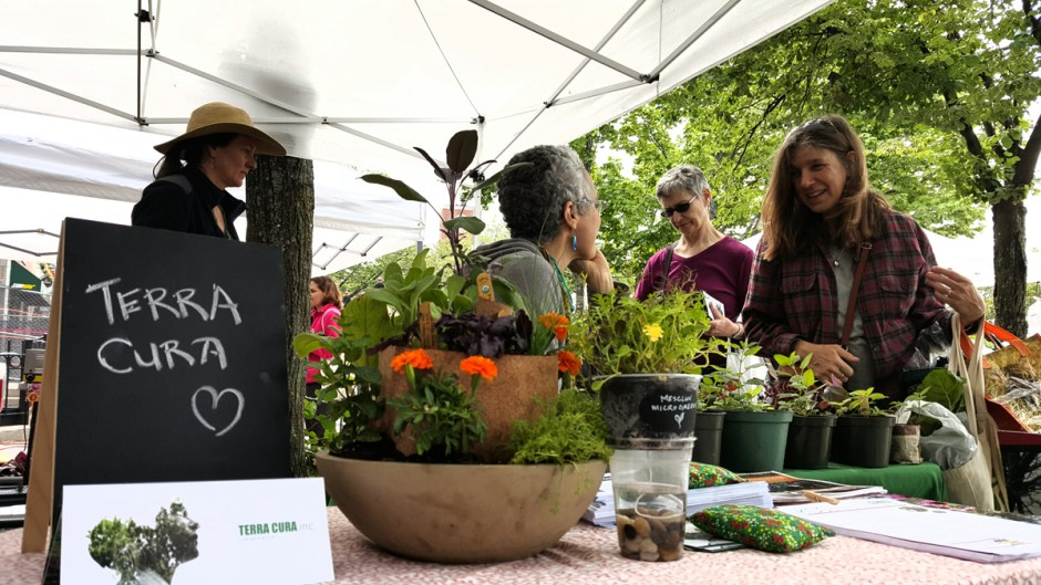 Terra Cura, a design firm working on COGdesign project at the Somerville Growing Center, at the Union Square Farmers Market, 2015 / Eva Leung
