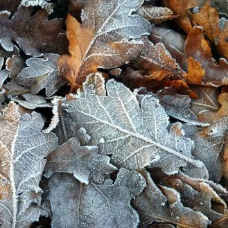 many icy leaves