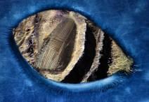 Noah's Ark, the alien ark