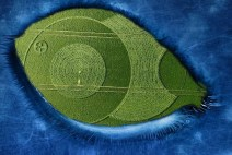 Crop Circle Eclipse announces the arrival of a huge celestial body!