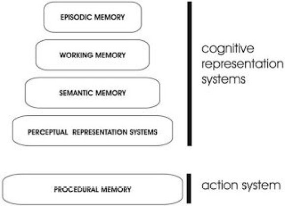 Tulving's SPI (serial-parallel-independent) model (1995) of memory
