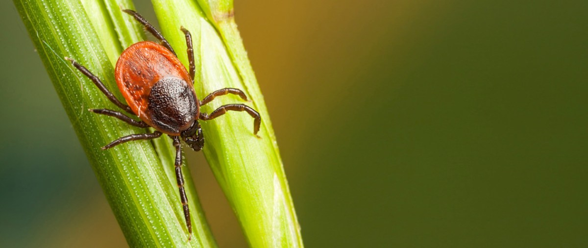 First Multiplex Test for Tick-Borne Diseases