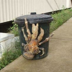 Cocobut crab on a rubbish bin