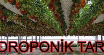Hidroponik tarım