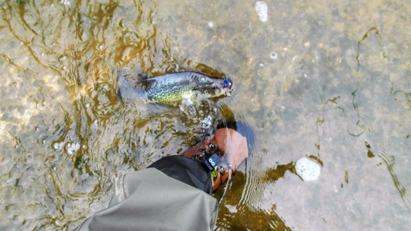 foot fish