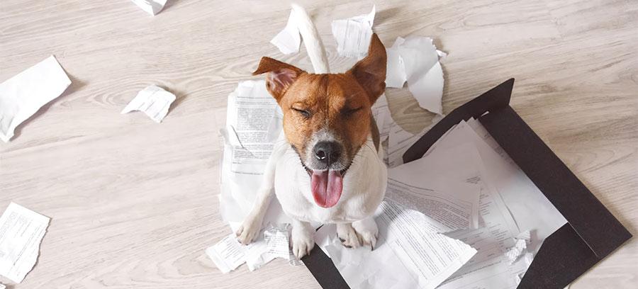 Dog Ate Paper Wallet