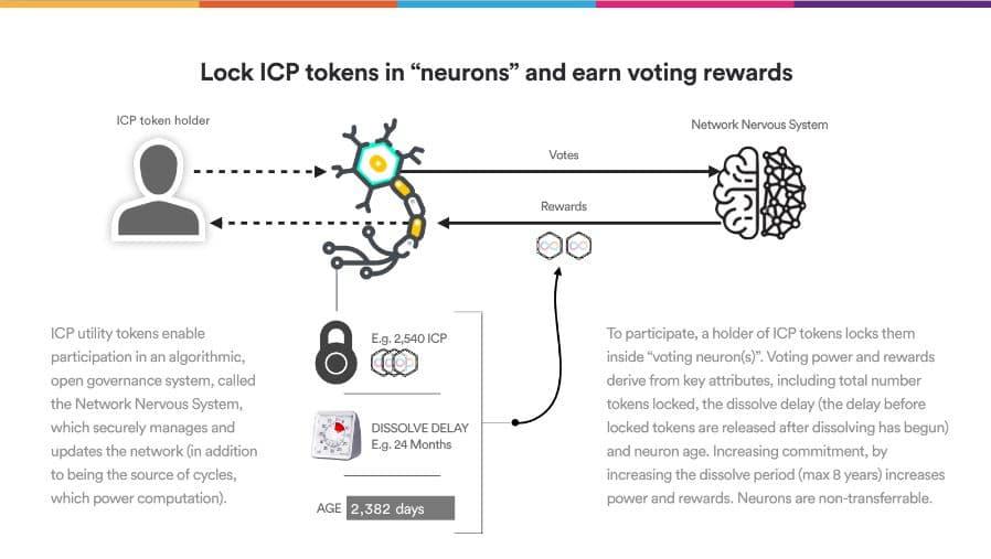 ICP Neurons