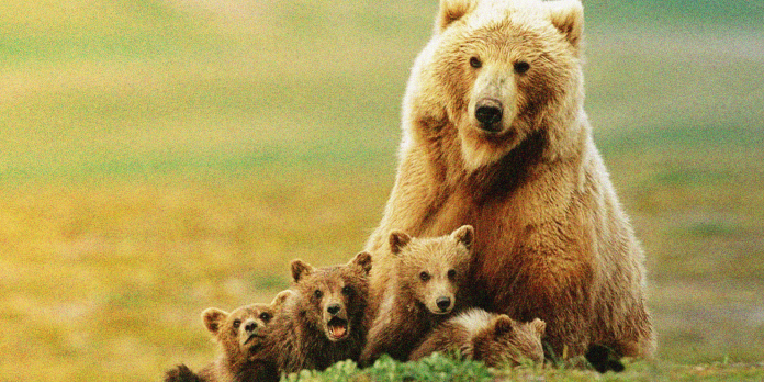 Who is investing in bitcoin - photo of bears