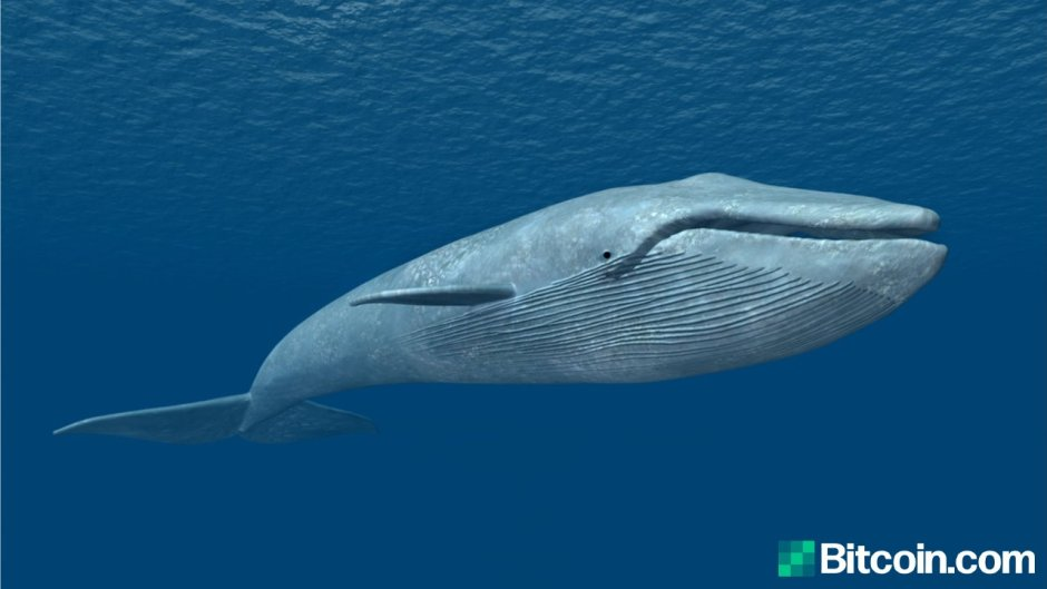 Mystery Bitcoin Whale from 2010 Disappears, Dormant Address from 2013 Sees Strange Activity