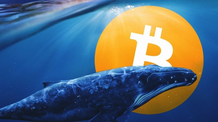 CryptoX - Criptovalute - Pages - Whale Alerts