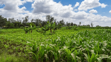 Etherisc announces the enrollment of 17K Kenyan farmers to their blockchain-based crop insurance programme..