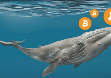 The third largest Bitcoin Whale bought $13M Worth of Bitcoin at $40.5K
