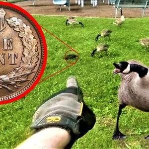 I found a SUPER OLD COIN in the park, then got ATTACKED by VICIOUS GEESE! | The Ultimate Coin Hunt