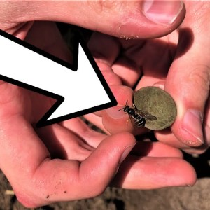 I dug up an old coin in the woods, then this happened...