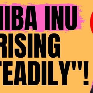 SHIBA INU DOING WELL - BUILDING UP NICE AND STEADY!