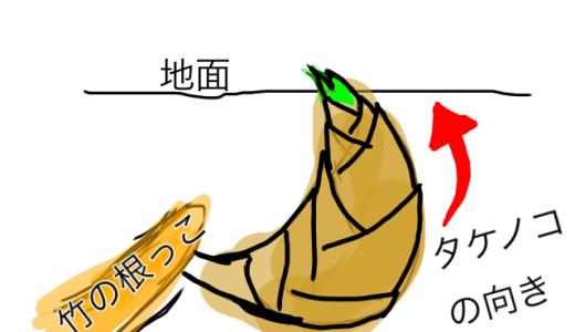 タケノコ掘りで20万円稼ぐ② (タケノコの効率的な掘り方編)