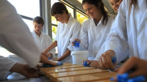 """Trinity College Colac's """"emerging science"""" class students Tim Parker, Indy Paddick, Jessica Fish and Natasha Heming wipe sunscreen off timber panels in an experiment with the Friends of the Earth researchers."""