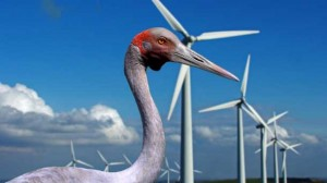 A wind farm opponent says brolga data went missing during the approval process for  Colac district wind turbines.