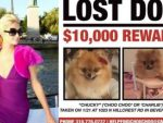 Paris Hilton ofrece recompensa de US$10 mil para localizar a perrita