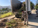 Continúa el mejoramiento de la imagen urbana en San José del Cabo