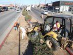 Gobierno de Los Cabos apuesta al mejoramiento de la imagen urbana; continúa la rehabilitación y reforestación de camellones