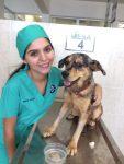 La importancia del cuidado y vacunación canina