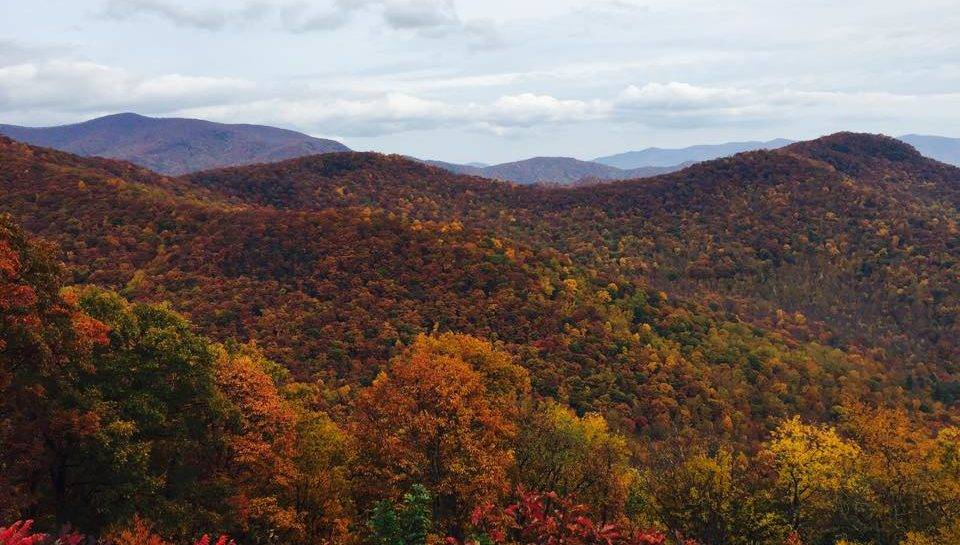 your guide to fall