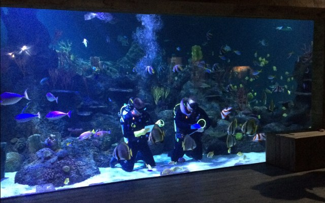 Skegness Aquarium | Cold Cuppa Club day out