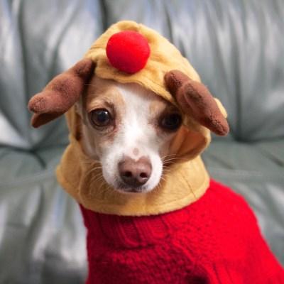 Elmo in reindeer antlers