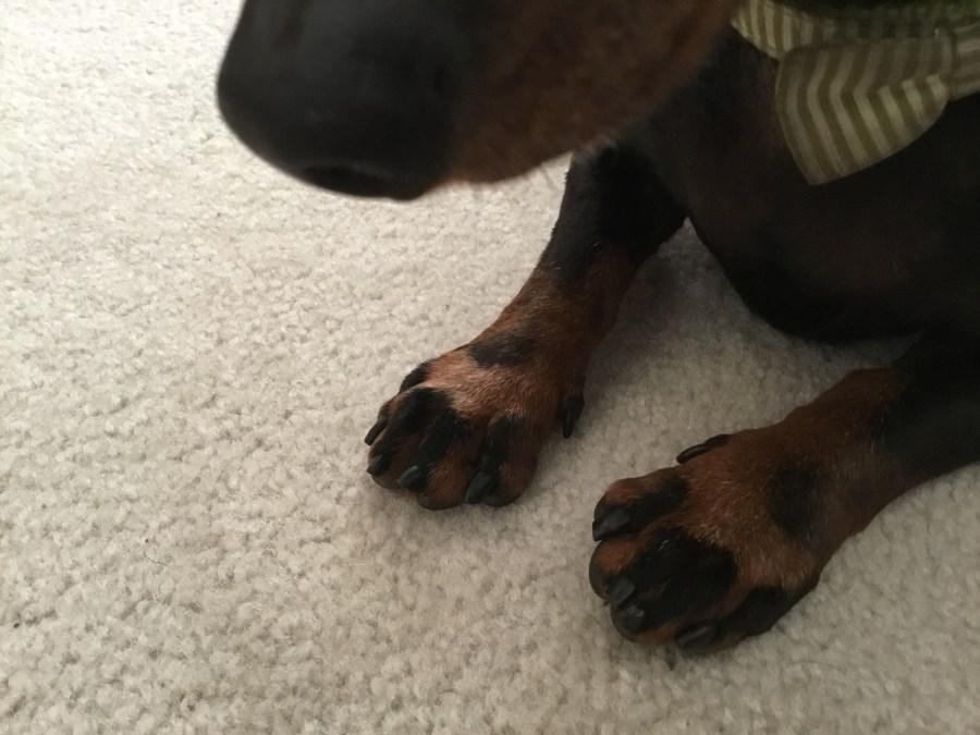Wiener Feet!