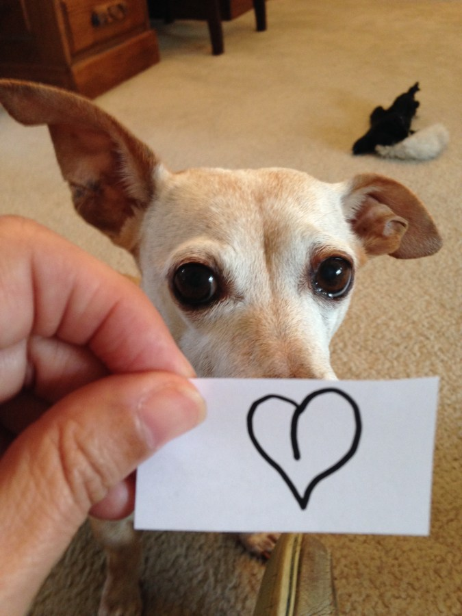 Does your dog have a heart on?