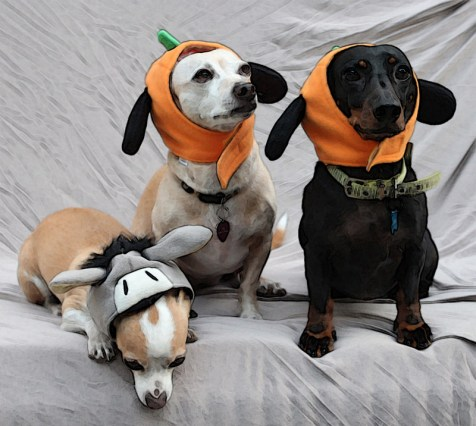 pumpkin_dogs.jpg