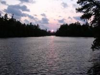 Poplar Sunset
