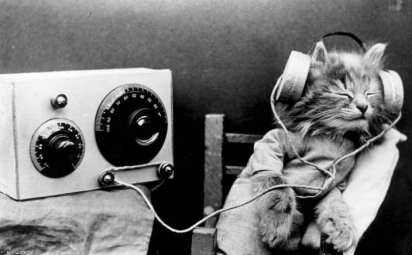 cat-headphones
