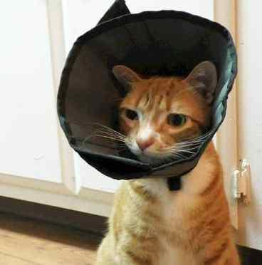 marm cone of shame